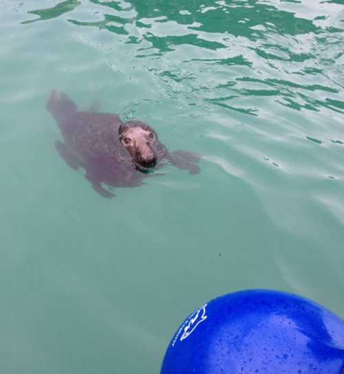 Seal Cove Safaris - Newquay Cornwall