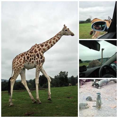Midlands Safari Park