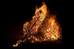 burningchristmastrees