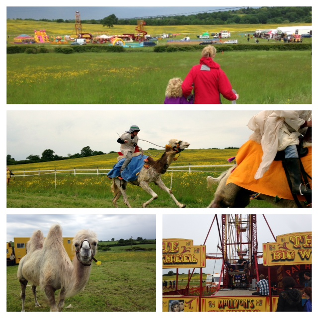 Camel Racing for Herts Air Ambulance, Northaw