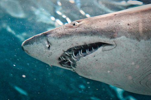 Kids and Shark Teeth