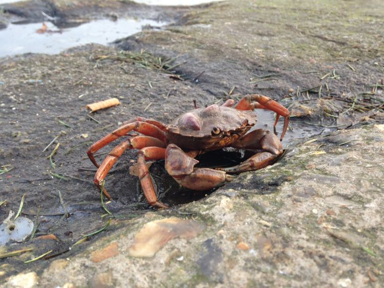 Best places for crabbing in Norfolk